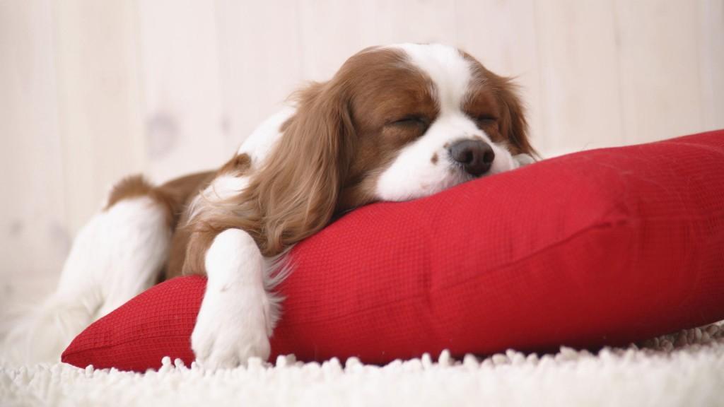 cuento infantil 1024x576 Cuento infantil: La increible historia de Zizu, el perro que no sabía morder